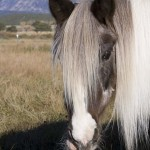 Patches The Pony-Dealing With The Death Of An Equine Friend