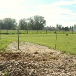 G&S Solutions: Equine Arena And Paddock Footing Help And Tips