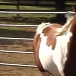 Horse In Round Pen How To