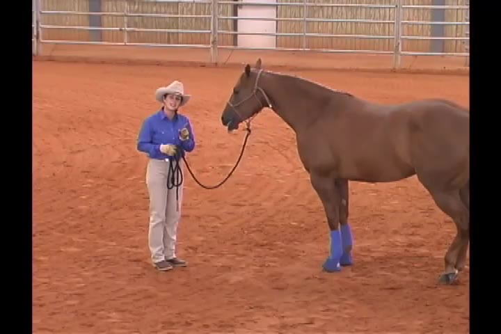 Julie Goodnight standing with a horse on a leadline.