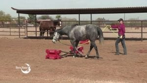 Owner leading horse over obstacles.