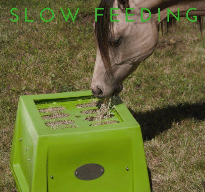 Savvy slow feeder.