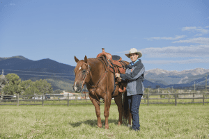Saddle Fit: Julie and Eddie