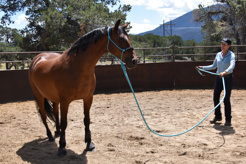 Julie working with horse on the lead line.