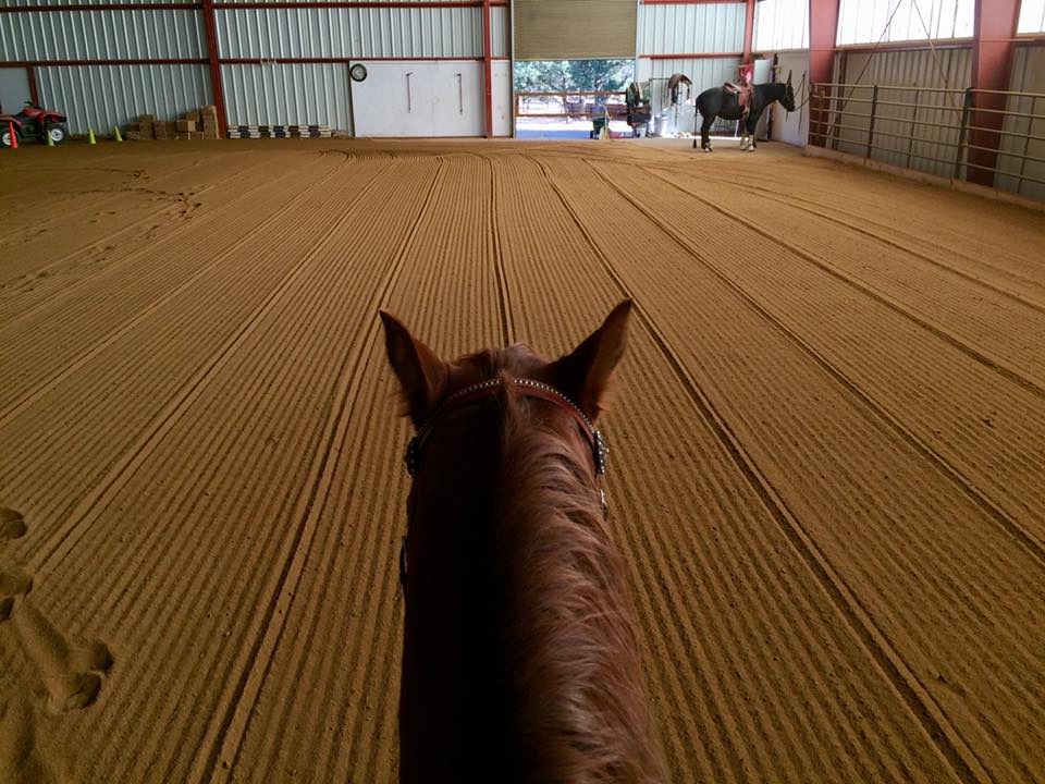 Looking between the ears of Annie to an indoor arena.