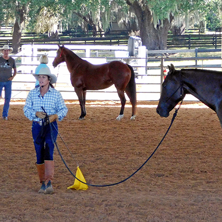 Julie doing lead line work with a horse at her Florida clinic