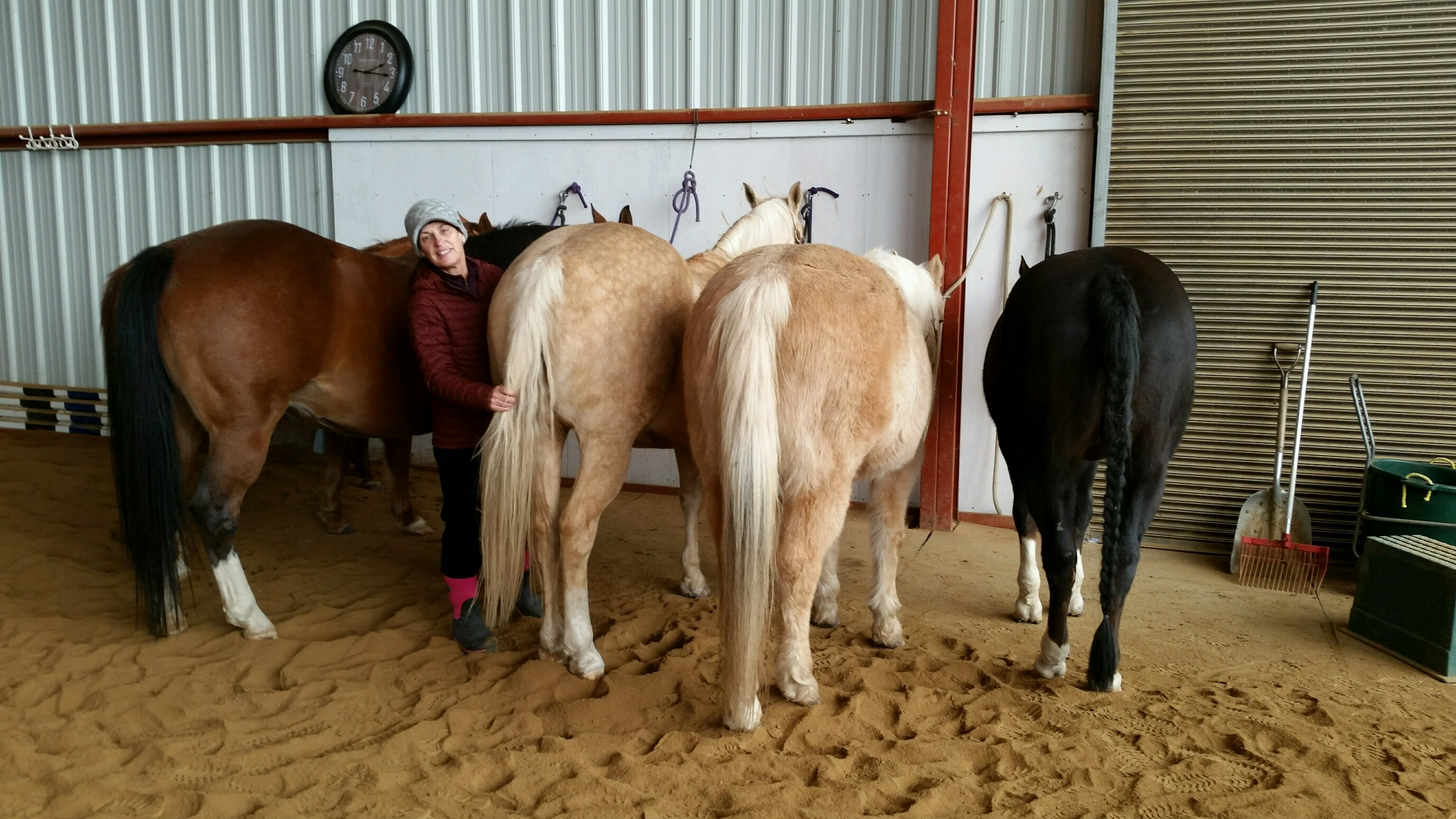 Julie with her horses in the indoor arena