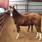 March 2018 Horse Report
