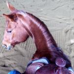 April 2018 Horse Report
