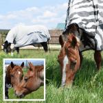 June 2018 Horse Report