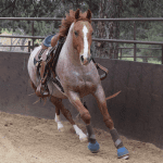 July 2018 Horse Report