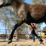 A Devoted Horse