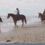 1117: Horses on the Beach